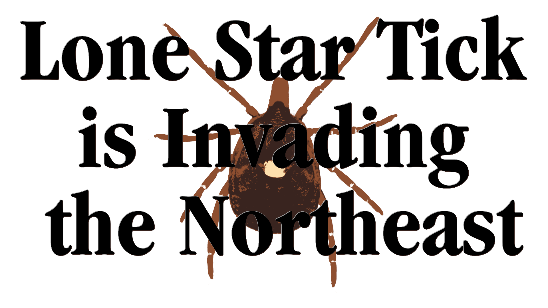 "Three tone silhouette of a lone star tick with the title ""The Lone Star Tick is Invading the Northeast"""