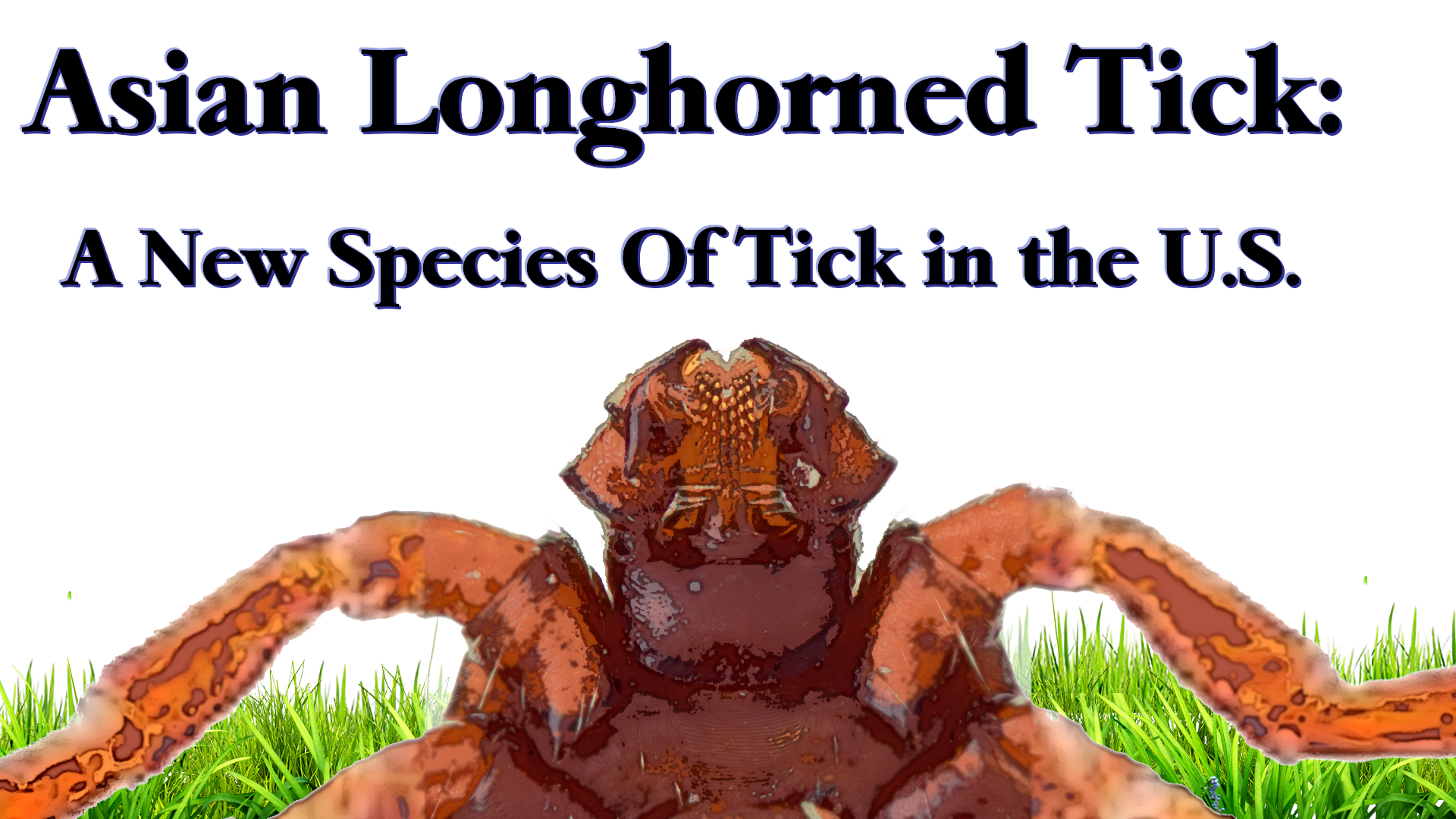 "Close-up of the head of an Asian Longhorned Tick with the title, ""Asian Longhorned Tick: A New Species of Tick in the U.S."""
